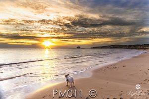 PM011